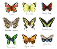 Butterflys. Watercolor imitation. Royalty Free Stock Images