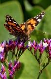Butterflyspring Arkivfoto