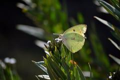 Butterfully en la flor salvaje imagenes de archivo