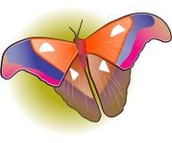 Butterfy Stock Afbeeldingen
