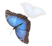 Butterfy Zdjęcie Stock