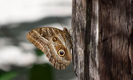 Butterfly. Butterfy upclose in nature Royalty Free Stock Photos