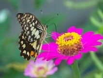 Buttergfly Stockbild