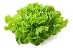 butterhead предпосылки изолировало белизну салата Стоковые Изображения