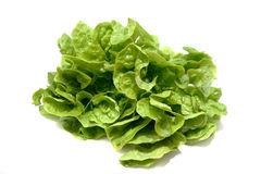 Butterhead lettuce Stock Photos