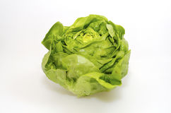 Butterhead Lettuce Royalty Free Stock Photo