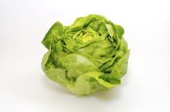 Butterhead Lettuce royalty free stock photo