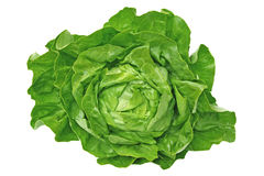 Butterhead Lettuce Stock Photo