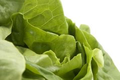 Butterhead Lettuce stock images