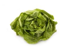 Butterhead Lettuce Royalty Free Stock Image