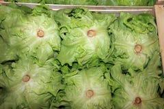 Butterhead Lettuce on Farmers Market in Catania royalty free stock photo