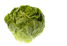 Butterhead Lettuce Isolated Stock Images