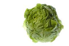 Butterhead Lettuce Isolated Stock Photo