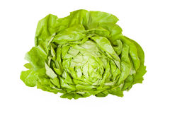 Butterhead Lettuce Isolated Royalty Free Stock Image