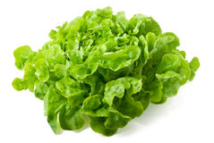 Butterhead lettuce isolated on white background. Close up of fresh butterhead lettuce isolated on white background Stock Images