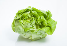 Butterhead lettuce Royalty Free Stock Images