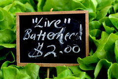 Butterhead Lettuce Sign. Butterhead lettuce with price sign at grower's market Stock Photography
