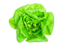 Butterhead lettuce Royalty Free Stock Photos