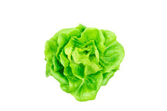 Butterhead lettuce vegetable isolated Royalty Free Stock Photography