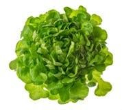 Butterhead sałata lub zieleni kierownicza sałatkowa fotografia odizolowywająca na białym b zdjęcie royalty free