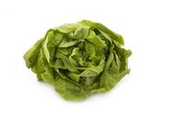 butterheadgrönsallat Royaltyfri Bild