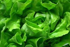 Butterkopfsalat-Hintergrund Stockfotografie