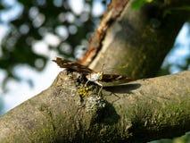 Butterlfly 库存照片