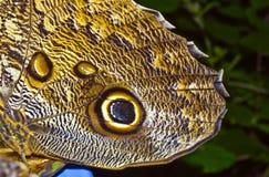 butterlfy επικεφαλής φίδι κουκ&o Στοκ Εικόνες