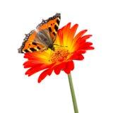 Butterlfy flower Stock Photos