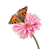 Butterlfy flower Stock Photography