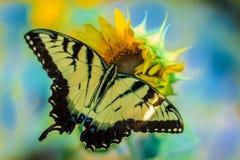 Butterly на солнцецвете Стоковые Фотографии RF