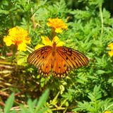 Butterly immagine stock