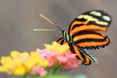Butterly Stock Images