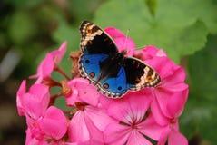 Butterly bovenop roze bloem Royalty-vrije Stock Afbeelding