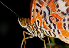 Butterly close up Stock Photo