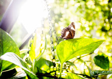 Butterly in the garden Stock Photography