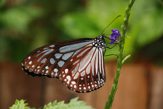 Butterly na górze kwiatu Fotografia Royalty Free