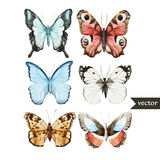 Butterly set. Beautiful watercolor vector butterfly set different types Stock Image