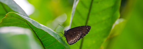 Butterly from the side wings closed. On a leaf Royalty Free Stock Photos