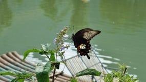 Butterly sul fiume Fotografie Stock Libere da Diritti
