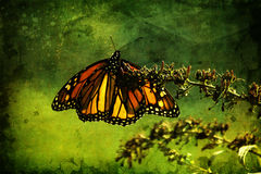 Butterly Textured Image Royalty Free Stock Photography