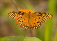 Butterly5. Orange butterfly on flower Stock Photo