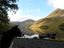 Buttermere Stock Foto's