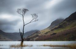 Buttermere drzewo Zdjęcie Royalty Free