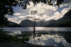 Buttermere lone tree Stock Photo