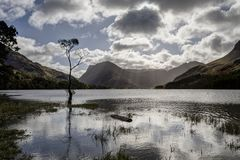Buttermere lone tree Royalty Free Stock Photography