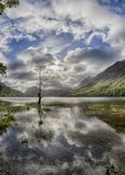 Buttermere lone tree Stock Photos