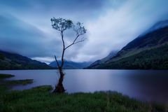 Buttermere Lonesome Tree United Kingdom. Taken in 2017 taken in HDR royalty free stock photography