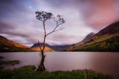 Buttermere Samotny Drzewny Zjednoczone Królestwo Obraz Royalty Free