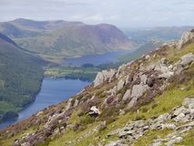 On hillside looking to Buttermere. Buttermere seen from rock and heather strewn hillside by Fleetwith Pike, Lake District stock photography